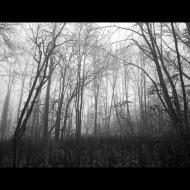 Ron Dobrowski: Forest in Fog