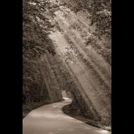 Marty Hulsebos: Misty Morning Rays