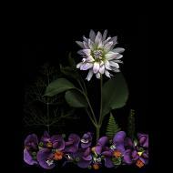 Fretta Cravens: Flower Landscape 10