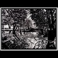 Kelli MacConnell: Hazelnut Orchard