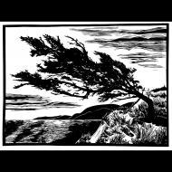 Kelli MacConnell: Windswept Bluff