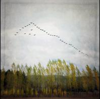 Gloria Baker Feinstein: Poplar Trees